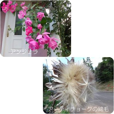 cats_20121018014304.jpg