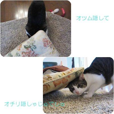 cats_20121021004944.jpg