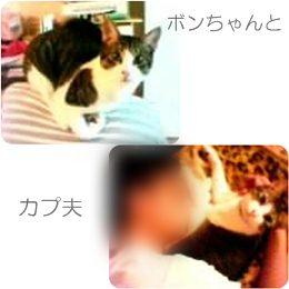 cats_20121022192836.jpg
