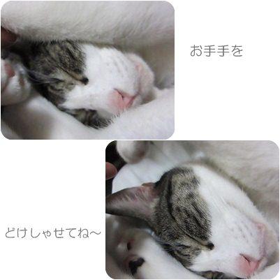 cats_20121026235710.jpg
