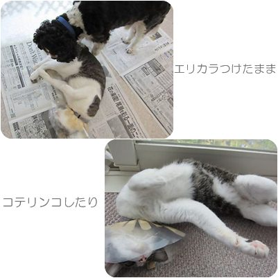 cats_20121104191651.jpg