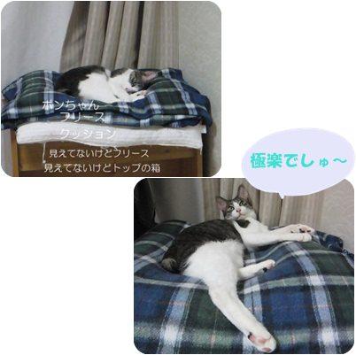 cats_20121108041403.jpg