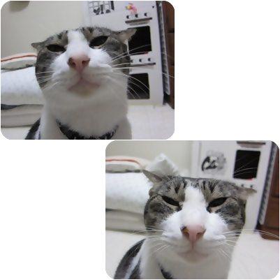 cats_20121111175925.jpg