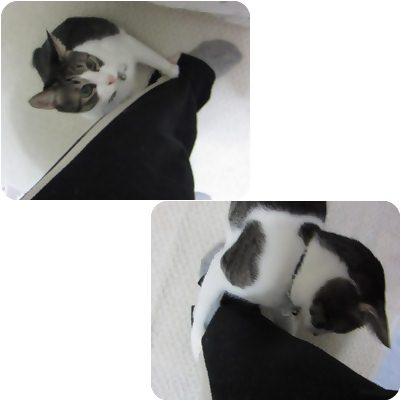 cats_20121112201420.jpg