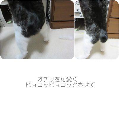 cats_20121113002358.jpg