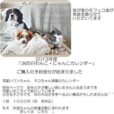 cats_20121114205011.jpg