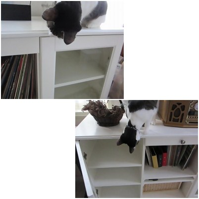 cats_20121117171455.jpg