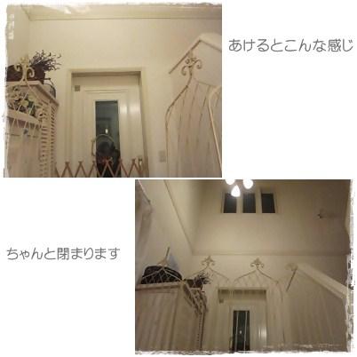 cats_20121122234537.jpg