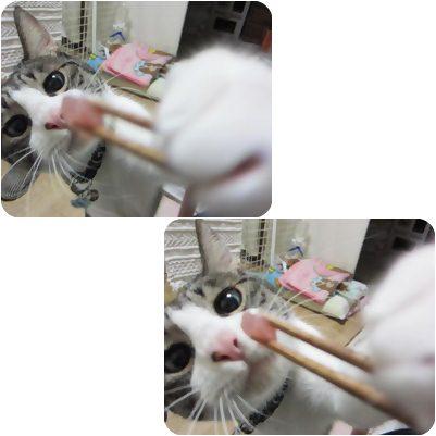 cats_20121124190119.jpg