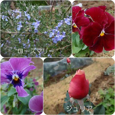 cats_20121128184339.jpg