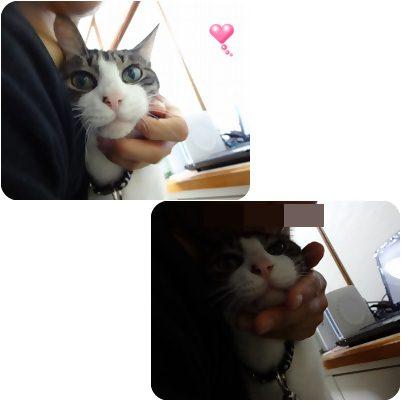 cats_20121128202549.jpg