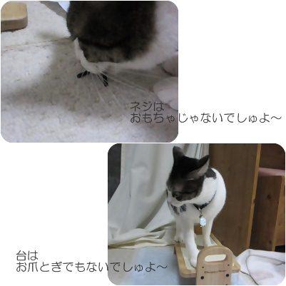 cats_20121204202438.jpg