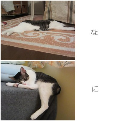 cats_20121207174757.jpg