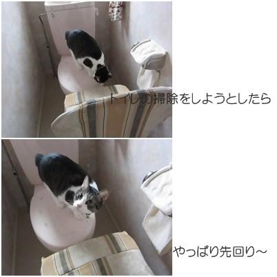 cats_20121208184406.jpg