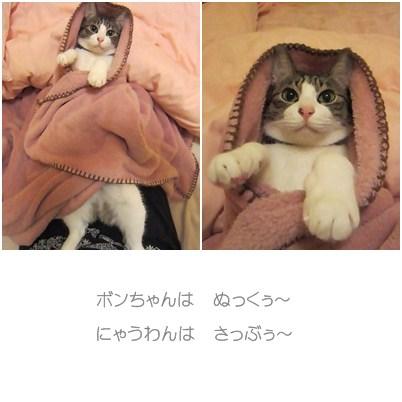 cats_20121210144612.jpg