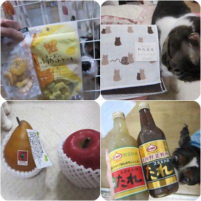 cats_20121229192329.jpg