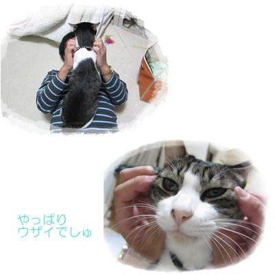 cats_20121230153321.jpg