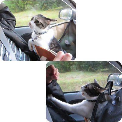 cats_20121230173048.jpg