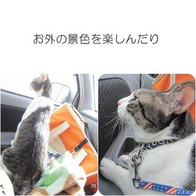 cats_20130104184147.jpg