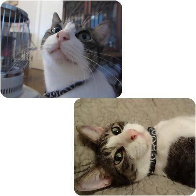 cats_20130110020424.jpg