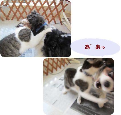 cats_20130111210422.jpg