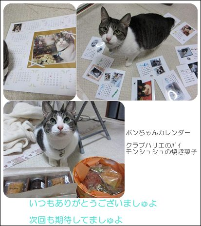 cats_20130116194005.jpg