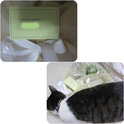 cats_20130117235554.jpg