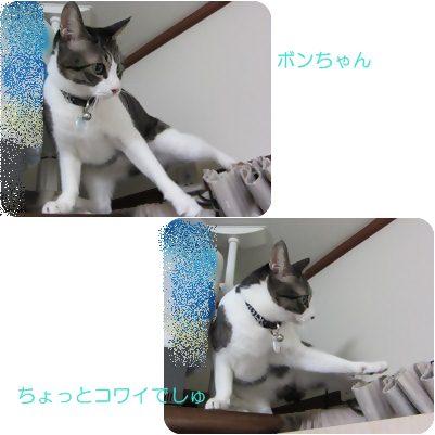 cats_20130118191908.jpg
