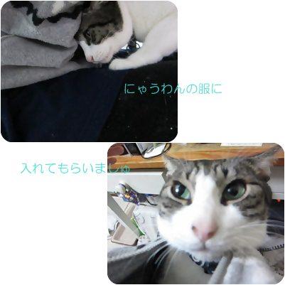 cats_20130119165103.jpg