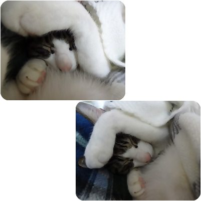 cats_20130129003607.jpg
