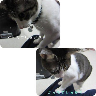 cats_20130203170352.jpg