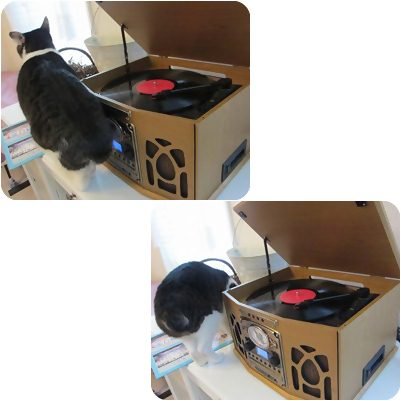 cats_20130204194851.jpg