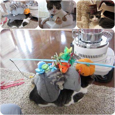 cats_20130208204425.jpg