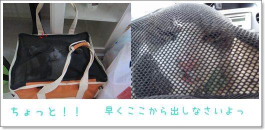 cats_20130212014415.jpg