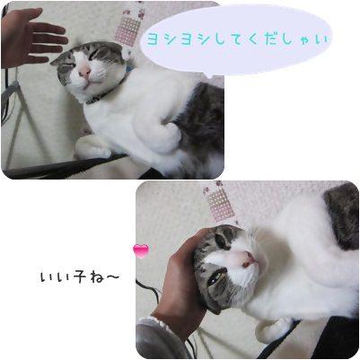 cats_20130212160835.jpg
