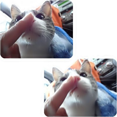 cats_20130213170835.jpg