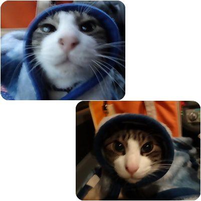 cats_20130215003526.jpg