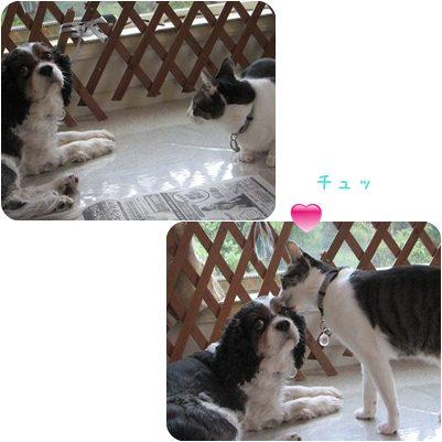 cats_20130215200113.jpg