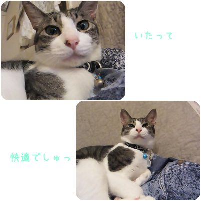 cats_20130217192054.jpg