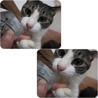 cats_20130220204502.jpg