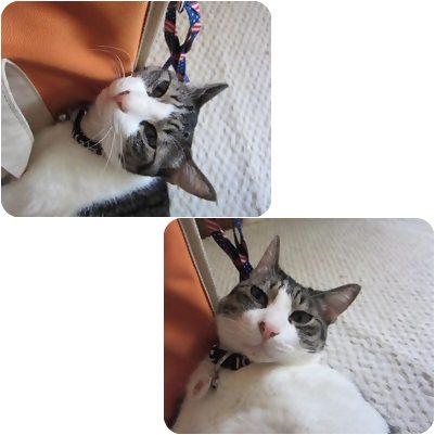 cats_20130222170355.jpg