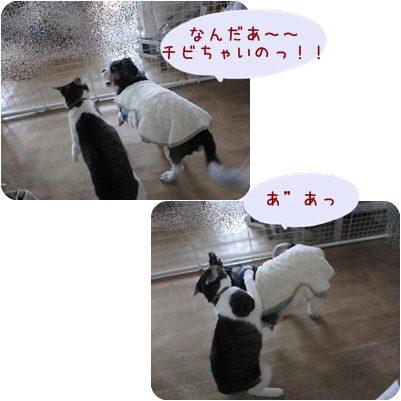 cats_20130224164903.jpg