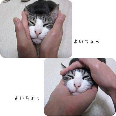 cats_20130227013056.jpg