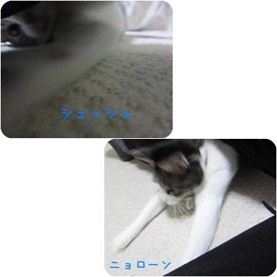 cats_20130306201024.jpg