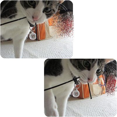 cats_20130314003147.jpg