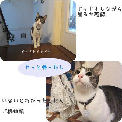 cats_20130316014726.jpg