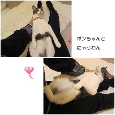 cats_20130328235029.jpg