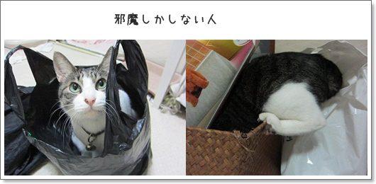 cats_20130406182235.jpg