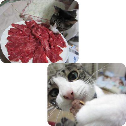 cats_20130406193455.jpg