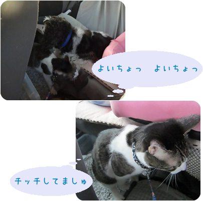 cats_20130409135715.jpg